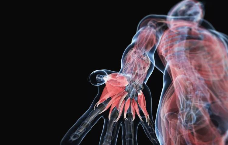 2020-05-25 14_06_22-Human Anatomy Study Tips